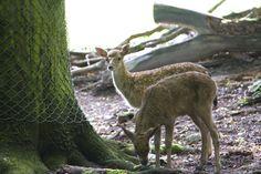 Tierpark Fasanerie Wiesbaden — Wiesbaden-Blog