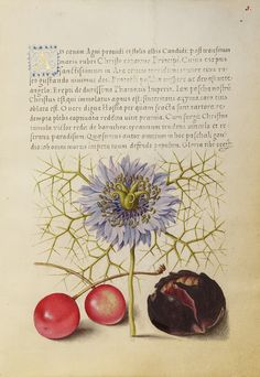 Love-in-a-Mist, Sweet Cherry, and Spanish Chestnut; Joris Hoefnagel (Flemish / Hungarian, 1542 - 1600), and Georg Bocskay (Hungarian, died 1575); Vienna, Austria; 1561 - 1562; illumination added 1591 - 1596; Watercolors, gold and silver paint, and ink on parchment; Leaf: 16.6 x 12.4 cm (6 9/16 x 4 7/8 in.); Ms. 20, fol. 3