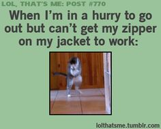 Omgoodness I laughed a little harder at a cat than I am comfortable admitting to!