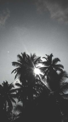 black and white sun through palm trees. -a black and white sun through palm trees. beach by Nydia Lilian , via Behance ALANA SPENCER Ocean Photography Coconutcomradery Mallorca Travel Guide Black And White Wallpaper Iphone, All New Wallpaper, Tree Wallpaper, Mobile Wallpaper, Phone Backgrounds, Wallpaper Backgrounds, Iphone Wallpaper, Collage Des Photos, Collage Pictures