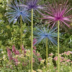 These are so neat! I want them for my garden! Everlasting Alliums