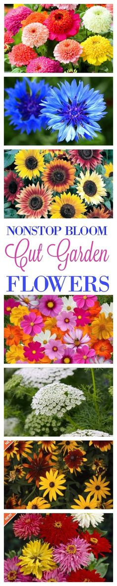 The Flower Seeds You'll Need To Buy For A Cut Flower Garden That Has Magnificent, Low Maintenance Blooms All Season Long (Diy Garden Flowers) Diy Garden, Summer Garden, Dream Garden, Lawn And Garden, Garden Projects, Garden Landscaping, Luxury Landscaping, Garden Types, Landscaping Company
