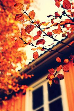 October's the month when the smallest breeze Gives us a shower of autumn leaves.