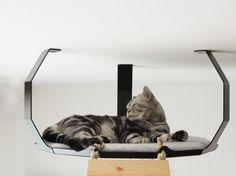 Merlin v pelíšku III. Cat Scratcher, Big Cats, Merlin, Animals, Design, Animales, Animaux, Scratching Post, Animais