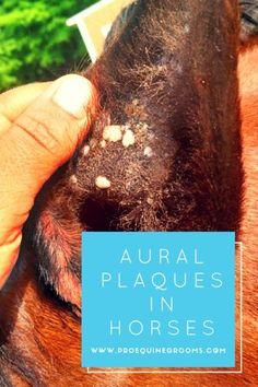 Pro Equine Grooms - Aural Plaques