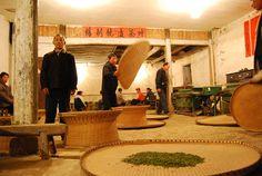 Dans la fabrique du Huo Shan Huang Ya The Huo Shan Huang Ya tea factory by Camellia-Sinensis, via Flickr
