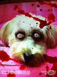 http://www.yourdesignerdogblog.com, Zombie Dog! - Your Designer Dog, walking dead, dead yourself