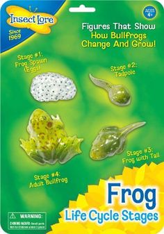 Insect Lore Frog Life Cycle Stages ** Learn more evaluations of the product by going to the web link on the photo. (This is an affiliate link). Science Store, Science Kits, Science Books, Science Games, Science Resources, Science Fair, Teaching Science, Life Science, Frog Activities