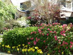 Azaleas and spring flowers are gorgeous this year!