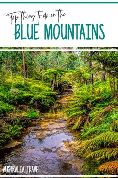 Looking for fun things to do in the Blue Mountains near Sydney, Australia? This guide covers what to see and do, great places to eat and all the travel tips you need to play your trip. Brisbane, Melbourne, Australia Tourism, Visit Australia, Sydney Australia, Western Australia, Australia Facts, Australia Holidays, Australia Photos