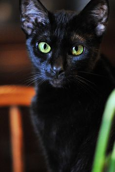Black cat with big green eyes. Beautiful