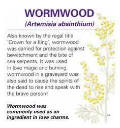 Magical herb wormwood