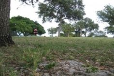 Dreher Dog Park - see video!  Free, nice dog park across from Palm Beach County Zoo; large and small dog areas with plenty of shade and water. (561) 586-5843  Hours: Sunrise to Sunset    http://www.petfriendlypalmbeach.com/parks-beaches.html