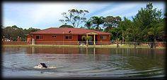 Dog Swimming Lake