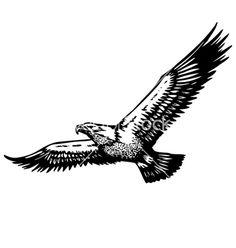 flying-eagle-vector-1341521.jpg (380×400)