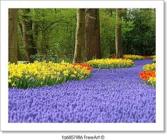 Spring flower bed in Keukenhof - Artwork  - Art Print from FreeArt.com