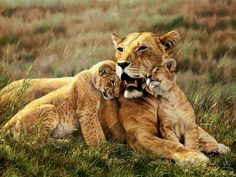 Simon Combes Complete and largest Print and Giclee Canvas Collection in the world. Every work of art published as a print or giclee canvas is represented at the best prices worldwide. Wildlife Conservation, Wildlife Art, Lion Painting, Artist Portfolio, Cute Baby Animals, Big Animals, Cat Breeds, Big Cats, Lions