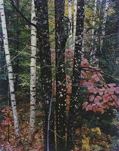 Elliot Porter, from Intimate Landscapes Portfolio, 1979