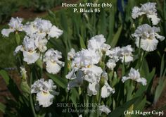 Iris FLEECE AS WHITE
