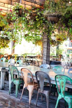 the-grounds-of-alexandria. Cafe, Sydney. Australia.
