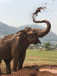Visit the Elephant Nature Park in Chiang Mai   Best Travel Experiences   POPSUGAR Smart Living Photo 61