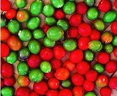 Ark of Taste : Chiltepin Pepper : Slow Food USA