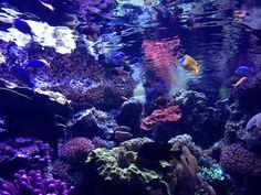 Long Beach Aquarium, Texture, Crystals, Sydney, Instagram Posts, Crafts, Inspiration, Blue, Surface Finish