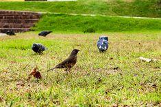 FOTOS SIN PORQUE: Naturaleza PAJAROS  Aves, Fotografía animal, Fotos de naturaleza, paisaje urbano, PAJAROS