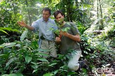 Amazon tribe creates 500-page traditional medicine encyclopedia | Mongabay