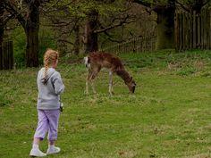 Rachel deer