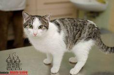 Tosiek is looking for a home ... #cute #cutecats #cats #caturday #kot #koty #neko #gato #katz #katzen #kittens #chat