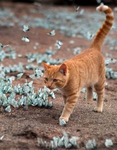 Photographer Natalia said she was lucky to have the camera so she was to catch the kitten playing with the butterflies outside her parents' home