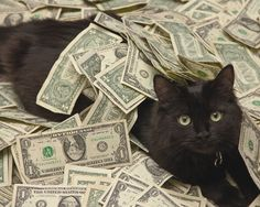 this cash cat looks like my Roger...