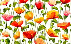 Artistic Flower  Artistic Poppy Colors Colorful Vine Wallpaper