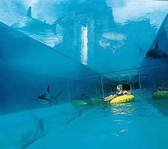 Considering a trip to the Atlantis Bahamas? If you've never been to the Bahamas, you don't know what you've been missing. The Bahamas hav. Vacation Places, Cruise Vacation, Vacation Destinations, Dream Vacations, Vacation Spots, Places To Travel, Places To See, Bahamas Cruise, Vacation Ideas