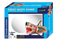Great White Shark Anatomy Model Kit by Thames and Cosmos.