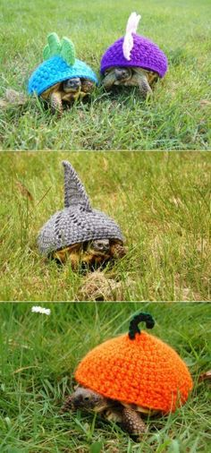 TURTLE COZIES! Now I wish I had a turtle to crochet for...