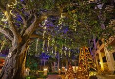 Hill Country Atrium Christmas Décor at the Gaylord Texan Resort in Grapevine, TX