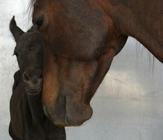 Mother's Love Quarter horse mare with newborn foal by Twna Douglas