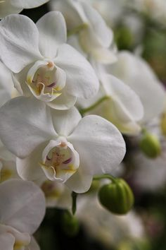 Love orchids!  They are great on a stack of books, on dinning tables- they look beautiful and elegant anywhere in the home!