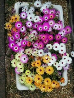 I planted these in an old belfast sink in my garden last summer. I planted these in an old belfast s Belfast Sink Water Feature, Belfast Sink Garden Planter, Butler Sink, Old Sink, Backyard Paradise, My Secret Garden, Garden Ornaments, Flower Beds, Backyard Patio