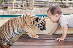 baby tiger meets baby boy... like the real life jungle boy!