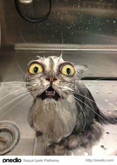 Scared and wet cat. / Baştan Bilinse Çok Farklı Yaşanacak 11 Durum - onedio.com