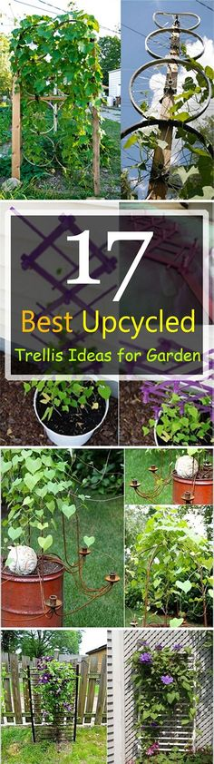 Many things that you throw away can be useful in the garden. If you don't believe see these 17 Best Upcycled Trellis Ideas For Garden.