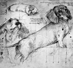 Da Vinci Dachshunds