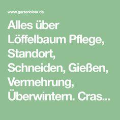 Alles über Löffelbaum Pflege, Standort, Schneiden, Gießen, Vermehrung, Überwintern. Crassula Hobbit Steckbrief und Pflege Tipps.
