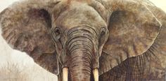 African Elephant My Original Watercolor Painting