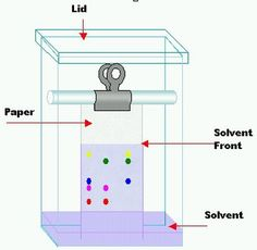 Paper chromatography is used to separate and identify the components of colored mixtures. - Theresa Knott, GNU Free Documentation License