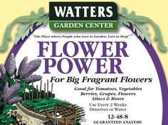 Feeding roses with my specially formulated 'Flower Power water-soluble fertilizer every two weeks produce HUGE blooms! Water your new rose bush deeply twice a month for bouquets of full, plump, flowers the entire year. Mountain Rose, Rose Bush, Backyard Parties, Flower Power, Berries, Bloom, Vegetables, Insects, Party