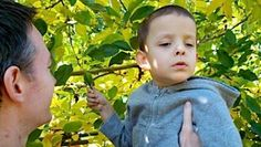 little boy touching a leaf on an apple tree